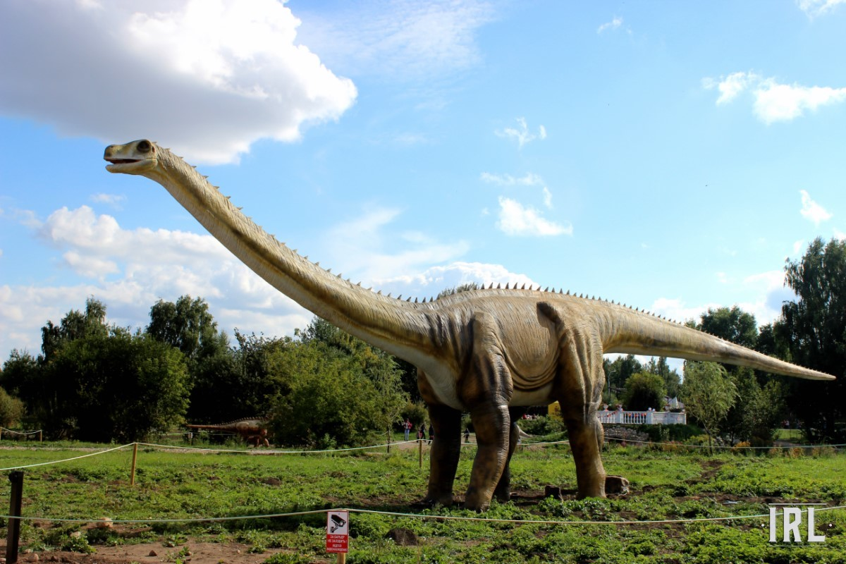 Диплодок – крупнейший представитель динозавров, кумир детей в мультфильмах. Крошечный мозг (с куриное яйцо) и «травоядность» – залог успеха.